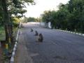 10  Zambie NP Luagwa