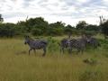 15  Zambie NP Luagwa