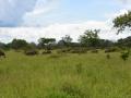 6 Zambie po cestě