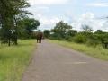 7 Zambie po cestě