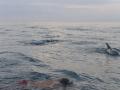 10 Zanzibar delfín tour
