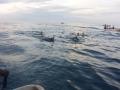 11 Zanzibar delfín tour