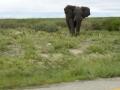 1 Botswana sloni