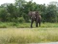 10 Botswana sloni