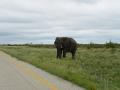2 Botswana sloni
