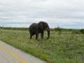 3 Botswana sloni