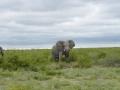4 Botswana sloni