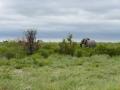 5 Botswana sloni