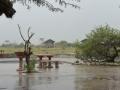 8 Botswana sloni