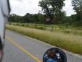 9 Botswana sloni