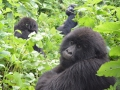 10 Rwanda Gorilla Trek
