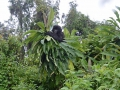 21 Rwanda Gorilla Trek