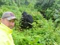 22 Rwanda Gorilla Trek
