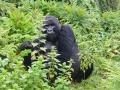23 Rwanda Gorilla Trek