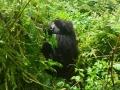 24 Rwanda Gorilla Trek