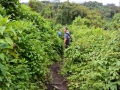4 Rwanda Gorilla Trek