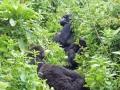 8 Rwanda Gorilla Trek