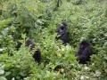 9 Rwanda Gorilla Trek
