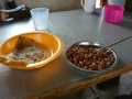 6 jíme fazole