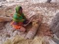3 kvis kokos