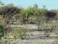 Namibie 091