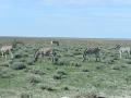 Namibie 092
