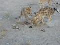 Namibie 103