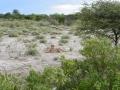 Namibie 122