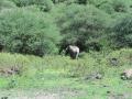 9 a po cestě potkáš slona