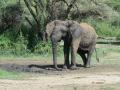 12 jsem slon a umím