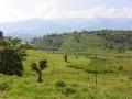 1 Zelená Uganda