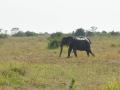 12 Slon podél silnice