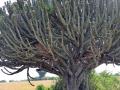 10 lvice v kaktusu