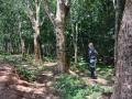6 Malawi lesy guma