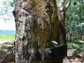 9 Malawi lesy guma