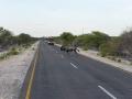 17 Namibie Etosha