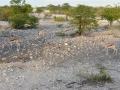 18 Namibie Etosha
