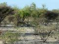 19 Namibie Etosha