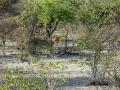 20 Namibie Etosha