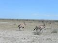 25 Namibie Etosha