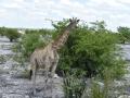 31 Namibie Etosha