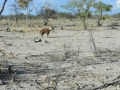 36 Namibie Eldorado