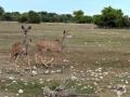 11 Namibie Etosha
