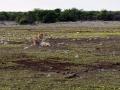 15 Namibie Etosha