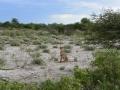 23 Namibie Etosha